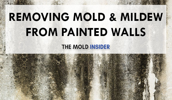 How To Remove Mold & Mildew From Walls
