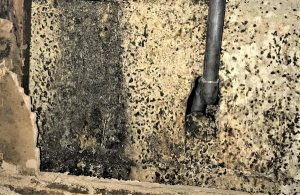 How-To-Remove-Mold-from-Cement