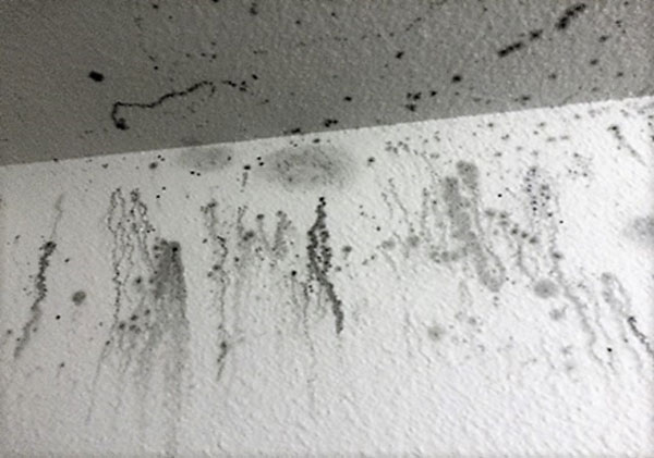 How-To-Remove-Mold-from-Painted-Wall