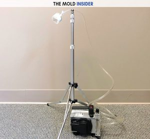 Black Mold: The Ultimate Toxic Mold Removal Guide – The Mold