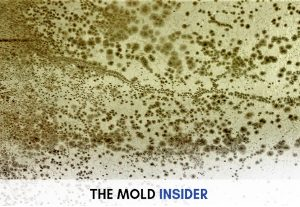 mold-removal-on-wall