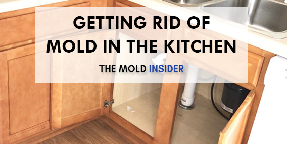 How To Remove Mold In Kitchen 100 Doable The Mold Insider