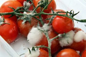 mold-on-tomatoe-in-fridge-cleaning