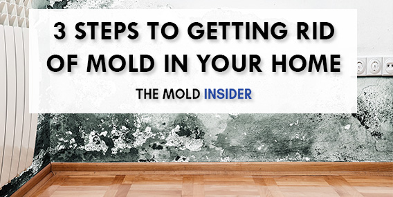 How-To-Get-Rid-Of-Mold-DIY