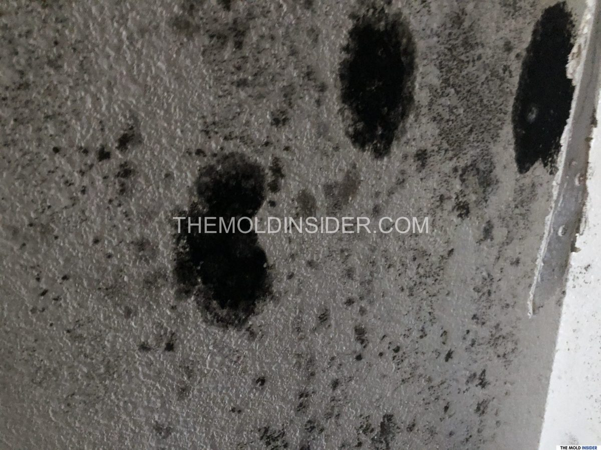What Can Mold Do To You - Potential Health Effects of Mold Exposure