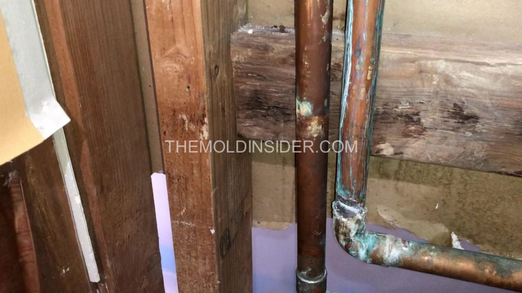 mold growing on leaking pipe