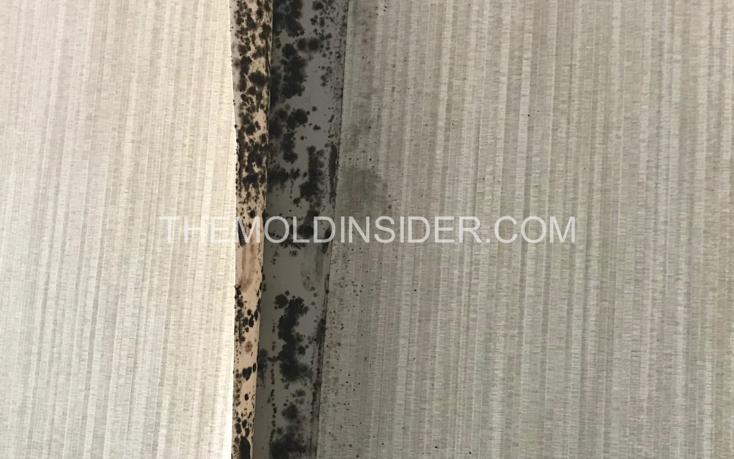 mold on a wall in home