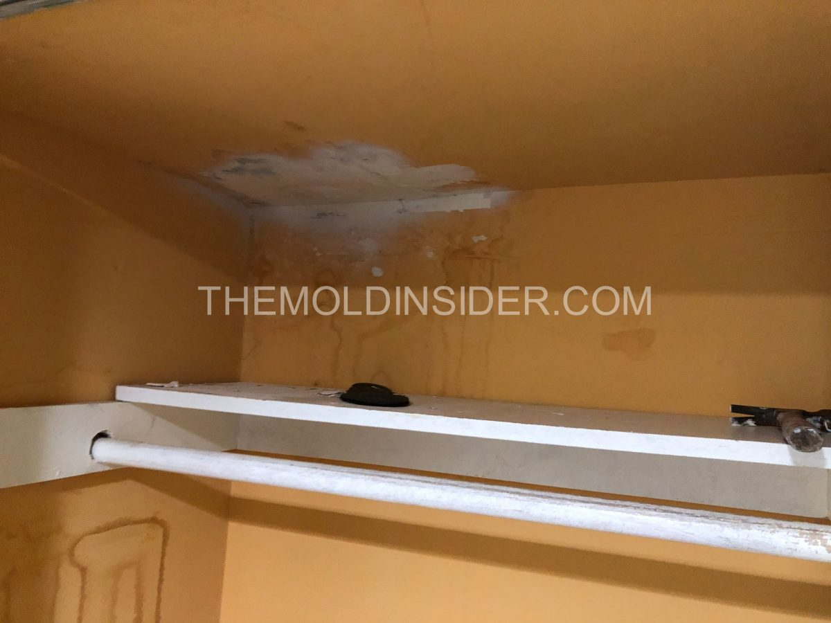 How To Find Mold in House