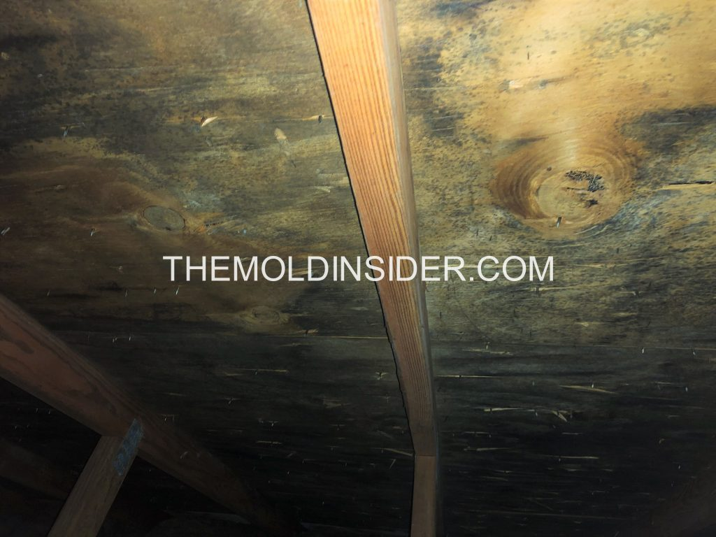 How To Get Rid Of Mold In The Attic