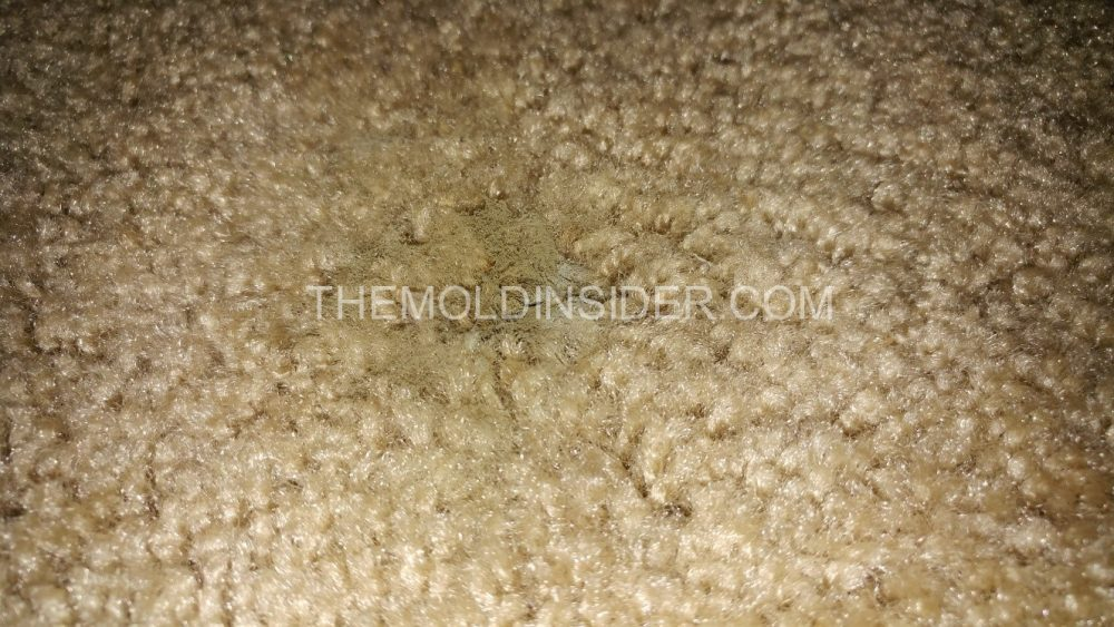 How To Remove Black Mold Growth Under Carpet Pad
