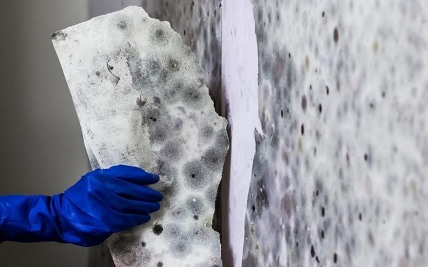 Can you stay in home during mold remediation?